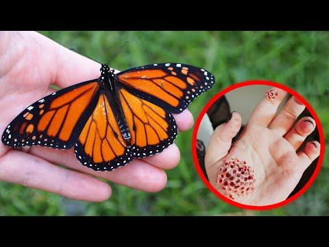 7 Deadliest Insects That Look Harmless Video