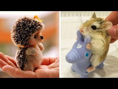 Cute Baby Animals Video Compilation
