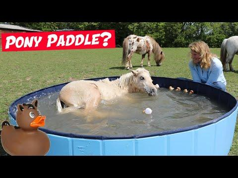 I bought my ponies a PADDLING POOL! Emma Massingale
