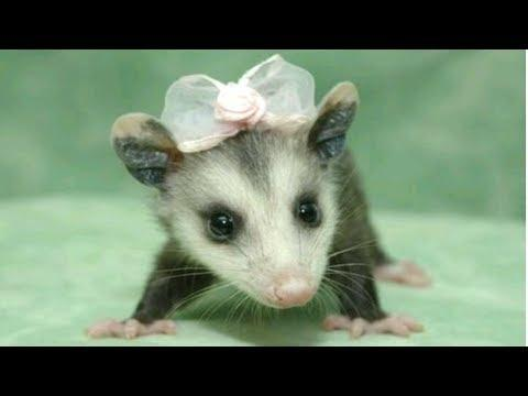 Top 10 Cute Baby Animals - Cute Animal Babies Videos [AWW]