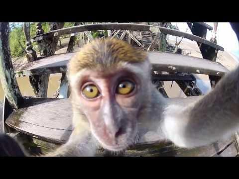 GoPro Best Of Animals 2014 | Part 1 And 2
