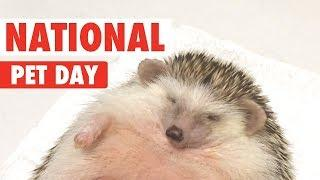 National Pet Day 2018 | Funny Pet Video Compilation