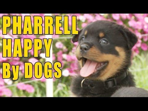 A Happy Dog Makes A Happy Human