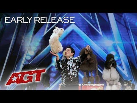 Cute Animal Act! Dominguez Poodles Perform Fun Tricks! - America's Got Talent 2019