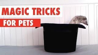 Magic Tricks and Magic Pets