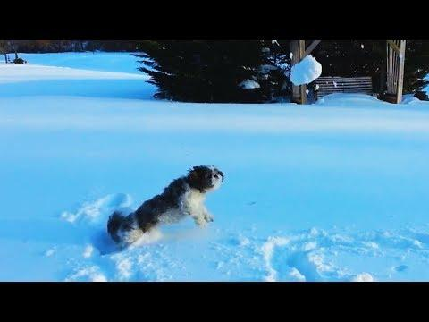 Dogs Chasing and Eating Snowballs Compilation