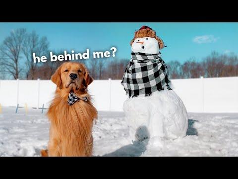 My Dog Reacts to Giant Snowman! #Video