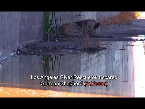 River Rescue Of A Scared German Shepherd (Adrienne)