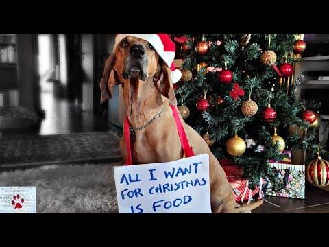What dogs want (for Christmas)