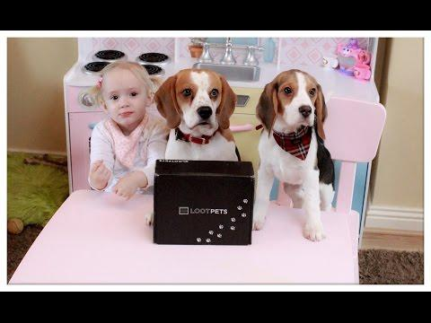 The Best Gifts For Cute Dog And Puppy: Lootpets Unboxing