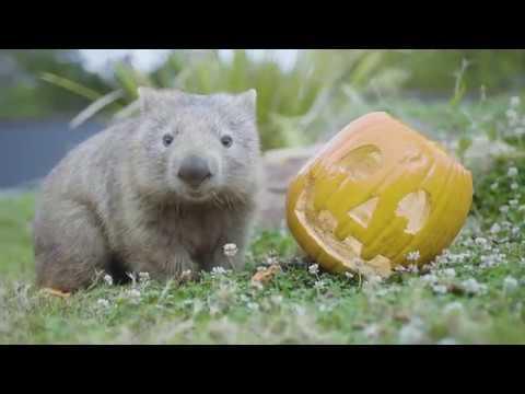 Best Animal Halloween Compilation 2019