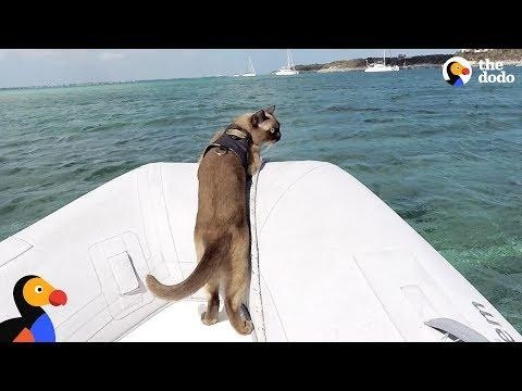 Cat Who Lives On A Boat Loves Visiting New Places - MISS RIGBY | The Dodo