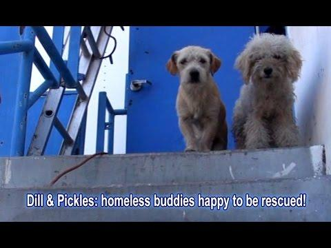 Dill & Pickles: Homeless Buddies Happy To Be Rescued!