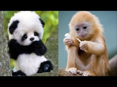 50 Cutest Baby Animals – Cute Baby Animal Videos – Funny Baby Animals Video