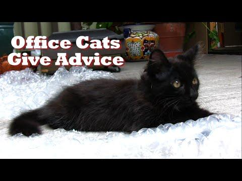 Office Cats Give Advice