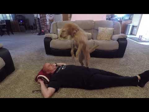 Lucy CPR dog
