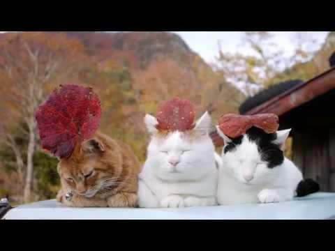 Sleepy Cats Wearing Leaf Hats