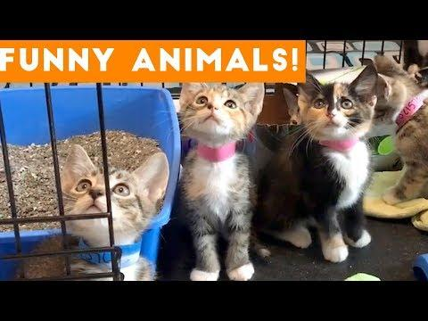Funniest Pets & Animals of the Week Compilation December 2018   Funny Pet Videos
