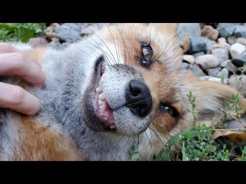 Finnegan Fox got muddy! #Video