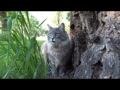 Cats in 4K. honeysada