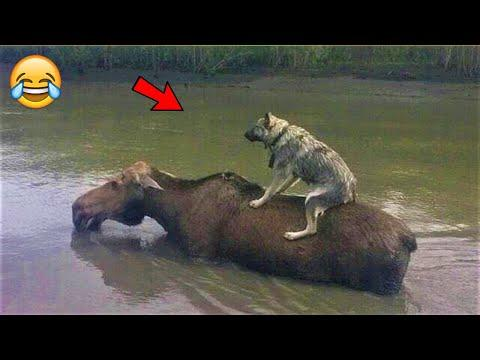 Animals save each other video || Amazing cases of mutual assistance between animals