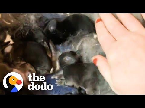 Woman Rescues 2 Bunnies And Ends Up With 10 #Video
