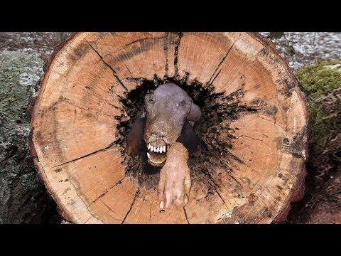 Lumberjacks Were Shocked by a Finding Inside a Tree