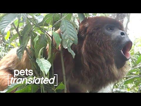 The Great Outdoors Video   Pets Translated