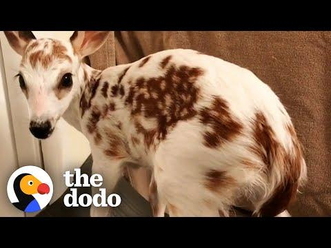 White Fawn Has The Cutest Reaction To Being Released In The Wild #Video