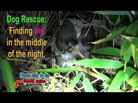 Finding Iris: Saving A Homeless Injured Dog + An Unexpected Surprise!