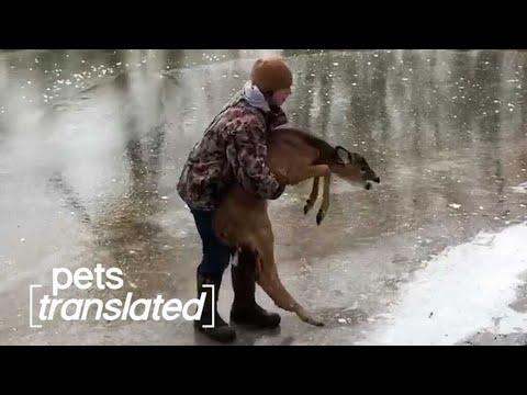 Talking Pets...To The Rescue #Video!
