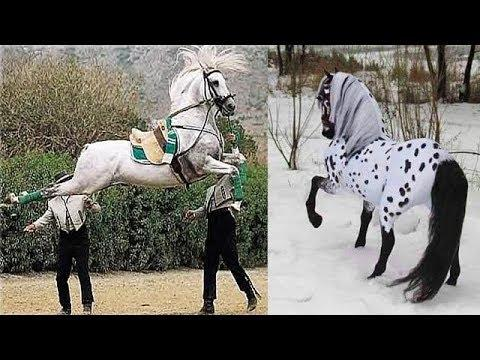 Cute And funny horse Videos Compilation cute moment of the horses - Baby animals #22