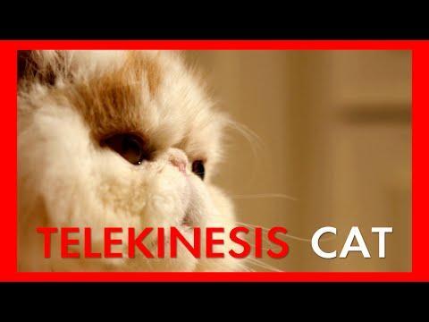Telekinesis Cat