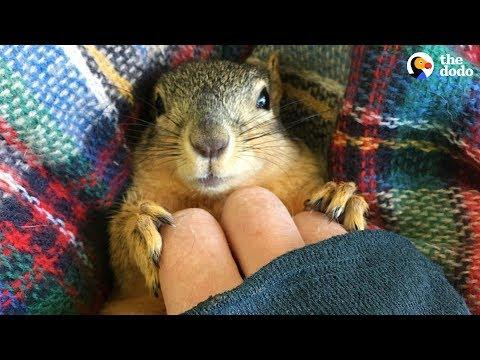 Rescue Squirrel Asks His Parents To Adopt Him - PEANUT