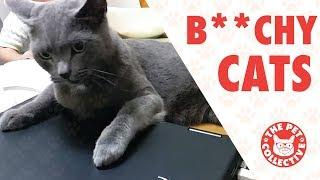 Bitchy Cats | Funny Cat Compilation 2017