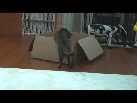 Box And Maru And Hana