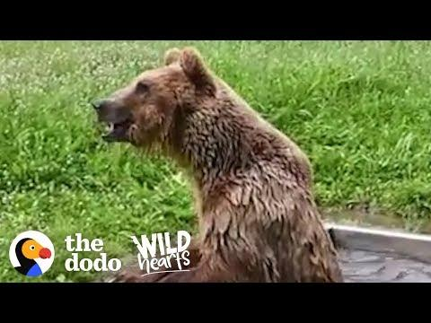 Bear Rescued from Tiny Cage has the Best Reaction to Freedom