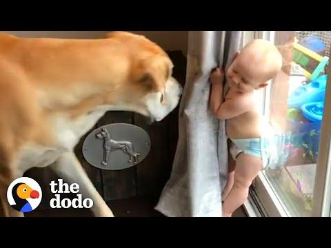 Watch This Little Boy Grow Up With A 180-Pound Best Friend Video