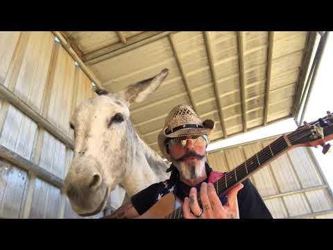 Donkey Demands to Hear Johnny Cash. Live Music for Donkey Named Hazel. Johnny Cash Mash-up #Video