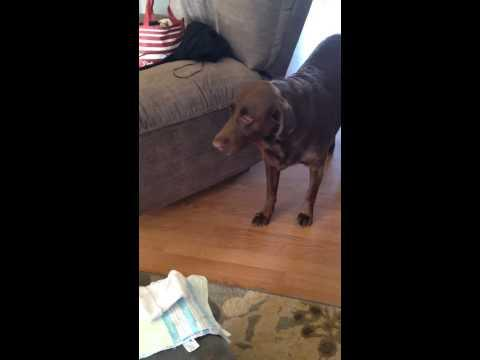 Charlie The Dog's Reaction To New Baby Arrival.