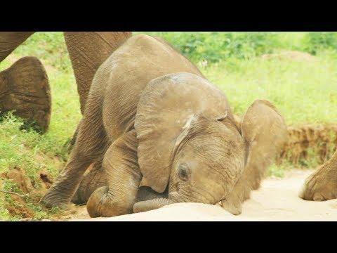 Baby Elephants are So Clumsy! | First Year on Earth