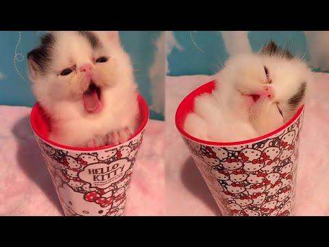 Tiny Kitty Falls Asleep In a Cup