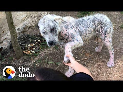 Friendly Stray Dog Refuses To Be Rescued Without Her Best Friend #Video
