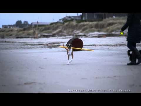 Duncan Lou Who Rockaway Beach 3