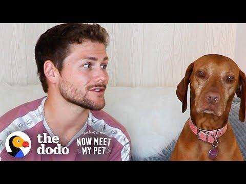 Dog Is NOT Impressed By Her Comedian Dad Drew Lynch | The Dodo You Know Me Now Meet My Pet