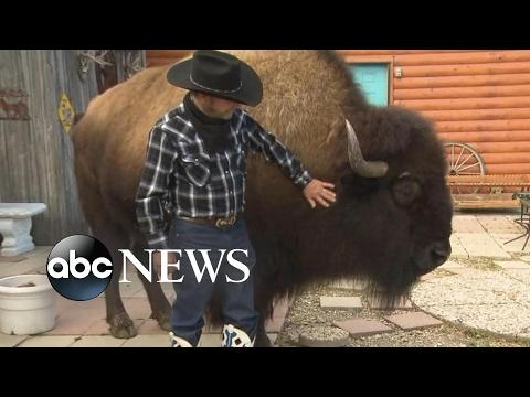 2 1/2 Ton Bison Roams Freely Through This Ranchers House