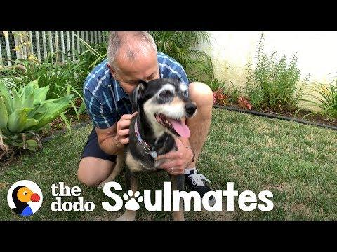 This Dog's Dad Got His Last Wish | The Dodo Soulmates
