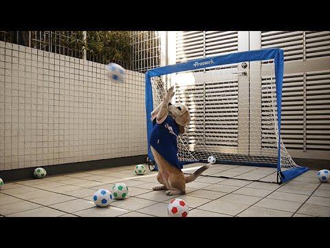Dog Shows Off His Impressive Soccer Goalkeeper Skills