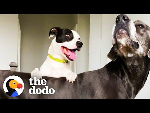 Dog's Best Friend Caught On Camera Sneaking Over To Play #Video