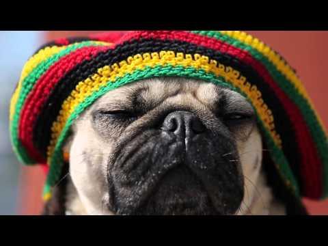 Doug The Pug - Rasta Pug